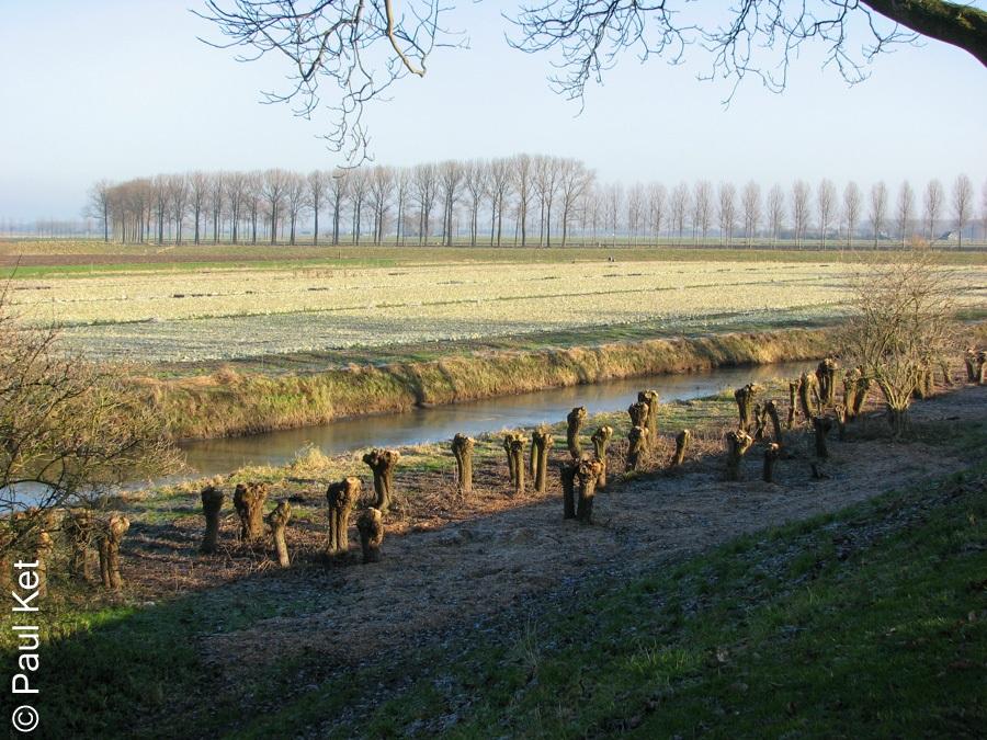 "Taken at Latitude/Longitude:51.913230/5.336722. 0.37 km East Buren Gelderland Netherlands <a href=""http://www.geonames.org/maps/google_51.913230_5.336722.html""> (Map link)</a>"