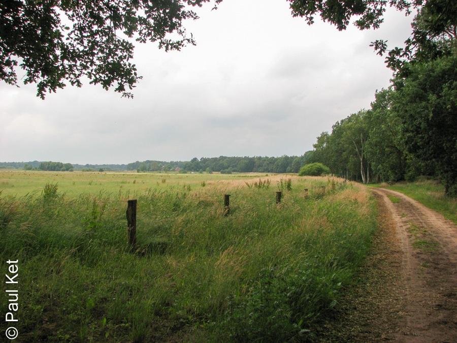 "Taken at Latitude/Longitude:52.514679/6.417701. 0.23 km South-East Laarakkers Overijssel Netherlands <a href=""http://www.geonames.org/maps/google_52.514679_6.417701.html""> (Map link)</a>"