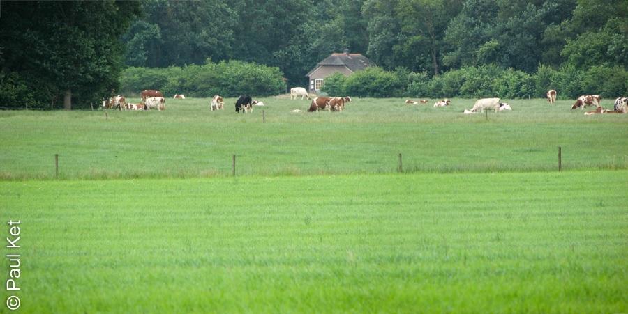 "Taken at Latitude/Longitude:52.492142/6.285359. 0.46 km South-West Rechteren Overijssel Netherlands <a href=""http://www.geonames.org/maps/google_52.492142_6.285359.html""> (Map link)</a>"