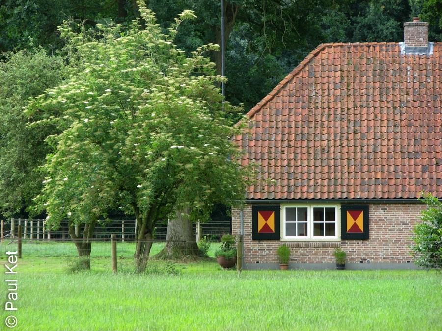 "Taken at Latitude/Longitude:52.492015/6.272522. 1.25 km West Rechteren Overijssel Netherlands <a href=""http://www.geonames.org/maps/google_52.492015_6.272522.html""> (Map link)</a>"
