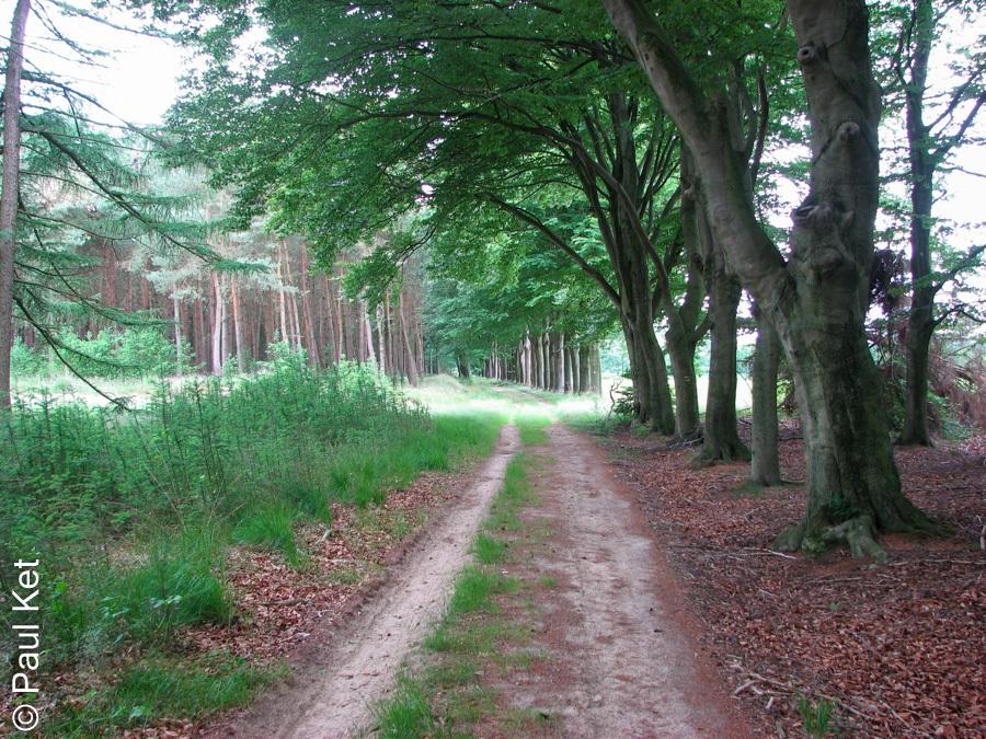 "Taken at Latitude/Longitude:52.495116/6.263575. 0.83 km East Millingen Overijssel Netherlands <a href=""http://www.geonames.org/maps/google_52.495116_6.263575.html""> (Map link)</a>"