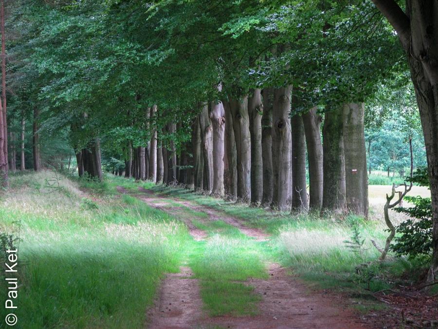 "Taken at Latitude/Longitude:52.495316/6.263532. 0.83 km East Millingen Overijssel Netherlands <a href=""http://www.geonames.org/maps/google_52.495316_6.263532.html""> (Map link)</a>"
