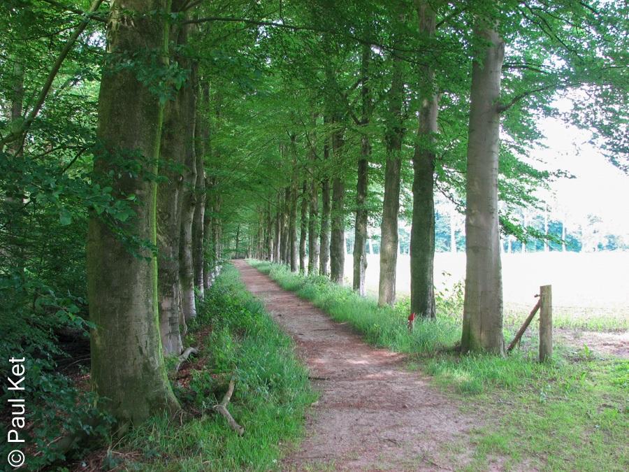 "Taken at Latitude/Longitude:52.492650/6.197977. 1.14 km North Lenthe Overijssel Netherlands <a href=""http://www.geonames.org/maps/google_52.492650_6.197977.html""> (Map link)</a>"