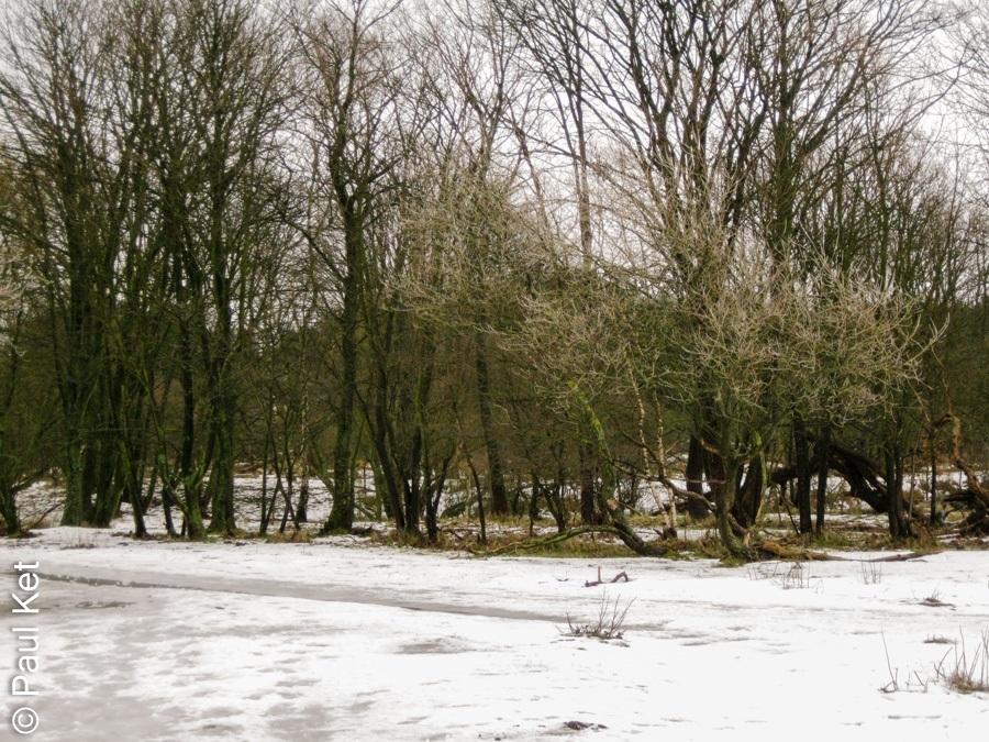 "Taken at Latitude/Longitude:52.432820/4.610602. 1.90 km North-West Santpoort-Zuid North Holland Netherlands <a href=""http://www.geonames.org/maps/google_52.432820_4.610602.html""> (Map link)</a>"