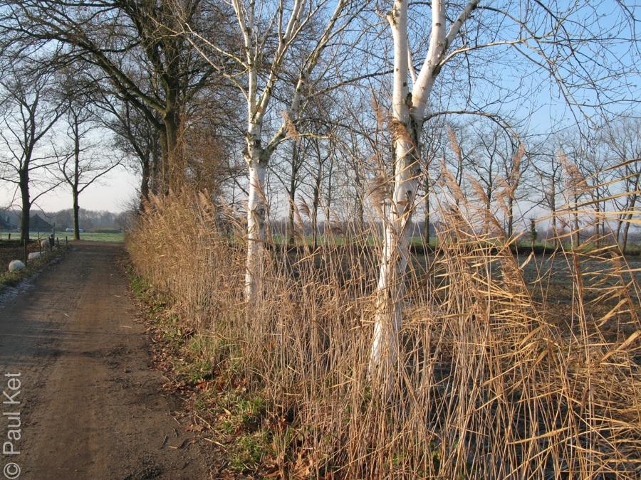 "Taken at Latitude/Longitude:52.124828/5.502113. 0.63 km North-West De Glind Gelderland Netherlands <a href=""http://www.geonames.org/maps/google_52.124828_5.502113.html""> (Map link)</a>"