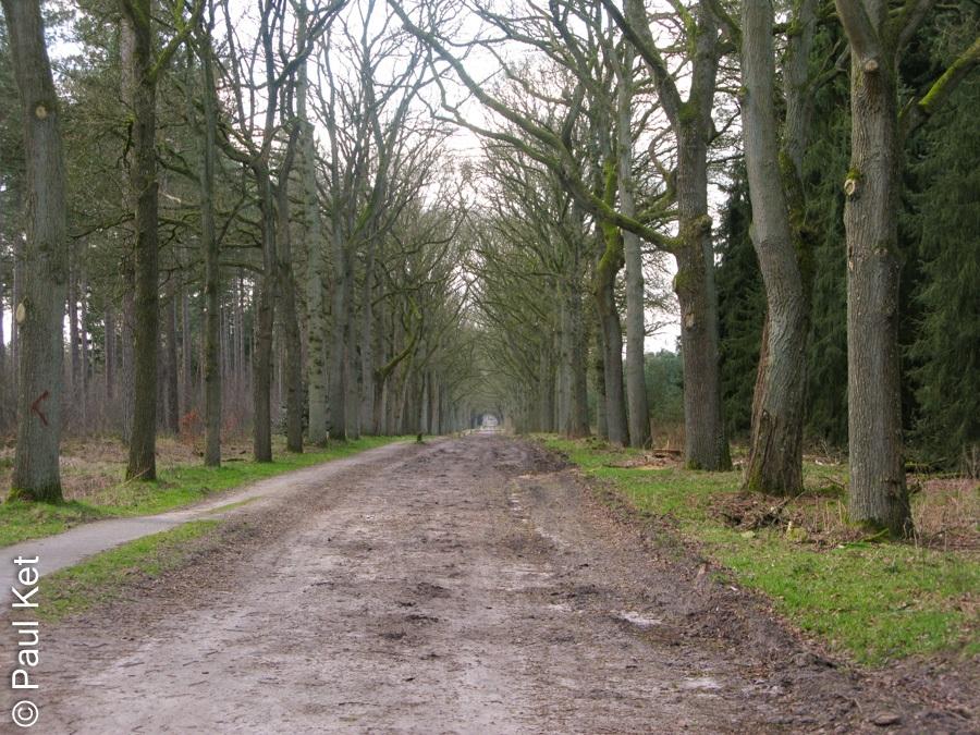 "Taken at Latitude/Longitude:52.109164/5.377008. 1.02 km West Den Treek Utrecht Netherlands <a href=""http://www.geonames.org/maps/google_52.109164_5.377008.html""> (Map link)</a>"