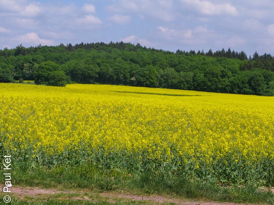 "Taken at Latitude/Longitude:50.277397/7.553963. 0.72 km South-East Waldesch Rhineland-Palatinate Germany <a href=""http://www.geonames.org/maps/google_50.277397_7.553963.html""> (Map link)</a>"