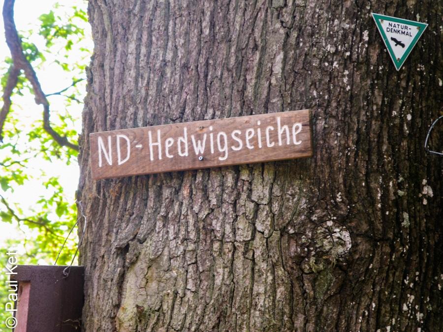 "Taken at Latitude/Longitude:50.254170/7.552165. 2.54 km North-West Mühltal Rhineland-Palatinate Germany <a href=""http://www.geonames.org/maps/google_50.254170_7.552165.html""> (Map link)</a>"
